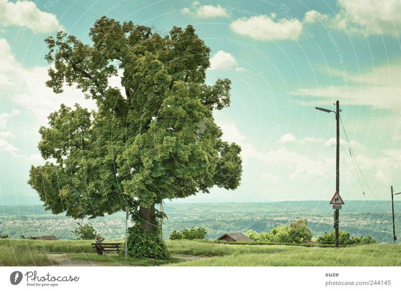 Zuwachs Natur Himmel Baum grün ruhig Wolken Wiese Landschaft Umwelt Wachstum Pause Bank natürlich Idylle Strommast Baumkrone