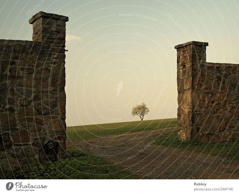 Auf Wiedersehen Ferne Landschaft Horizont Baum Park Feld Ruine Tor Mauer Wand Unendlichkeit ruhig Fernweh Idylle Natur Ferien & Urlaub & Reisen Wege & Pfade