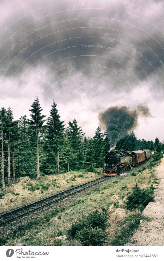Die Brockenbahn kämpft sich nach oben Ferien & Urlaub & Reisen Tourismus Ausflug Abenteuer Ferne Freiheit wandern Umwelt Natur Pflanze Tier Sommer