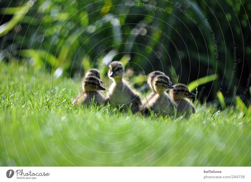 Nest aus *200* Grashalmen Natur Pflanze Sommer Tier Wiese Frühling Zusammensein Vogel Tierjunges frei Wildtier Sträucher Tiergruppe beobachten Neugier Seeufer