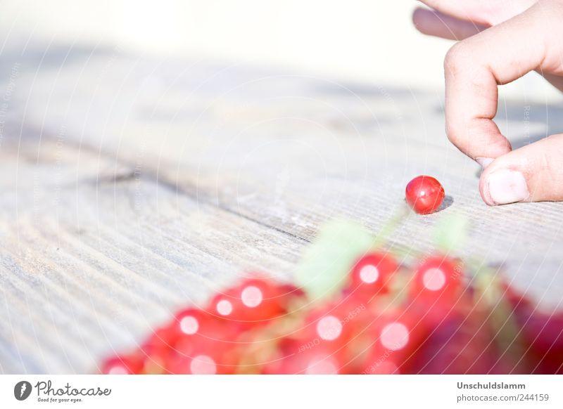 Hannes murmelt rot Sommer Freude Leben Spielen Garten Holz hell lustig Frucht Finger Fröhlichkeit süß Ziel Freizeit & Hobby Lebensfreude
