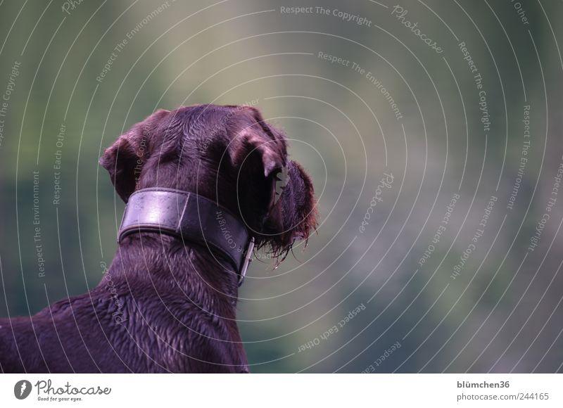 you've got a friend Hund Tier Leben braun Kraft warten nass stehen Fell Jagd entdecken Wachsamkeit Haustier klug Tierliebe diszipliniert