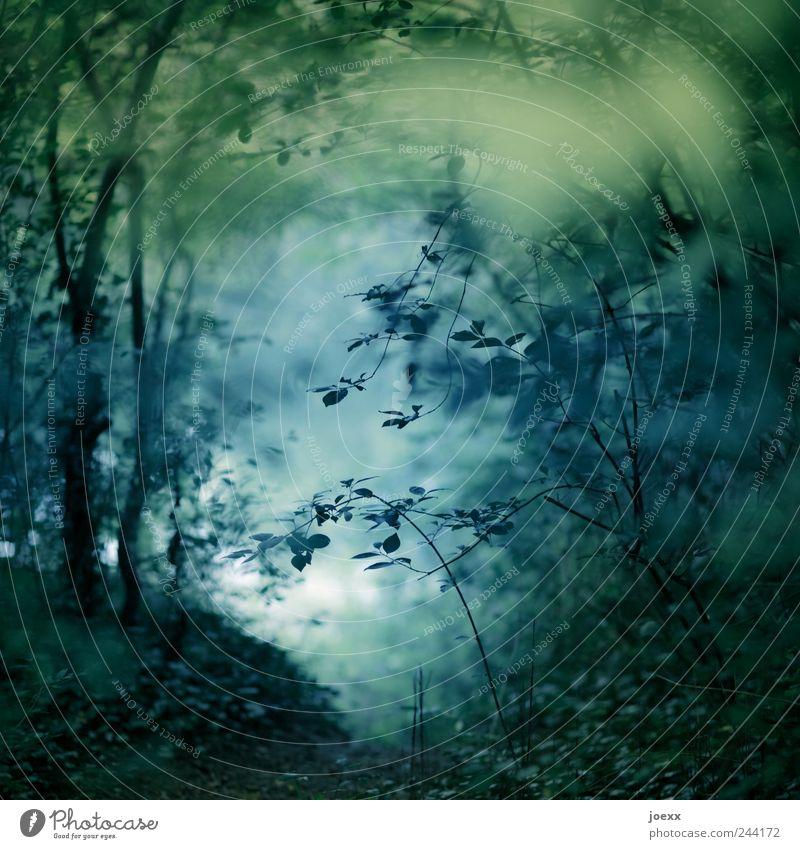 Am See Natur Wasser Sommer Pflanze Baum Park Seeufer blau grün schwarz Romantik ruhig träumen Idylle Schnörkel Zweige u. Äste Blatt Wald Waldlichtung Farbfoto