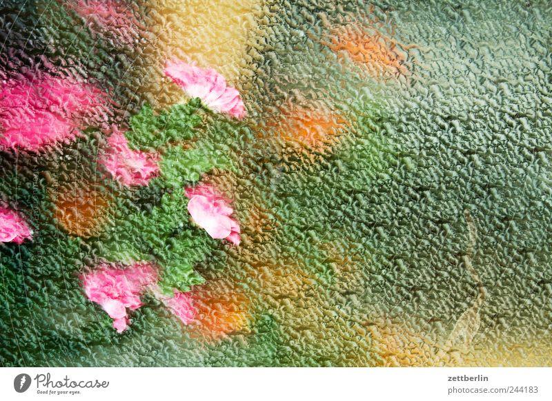 Blumen Pflanze Blatt Blüte Topfpflanze Stadtzentrum Fußgängerzone Haus Mauer Wand Fenster Dekoration & Verzierung Blumenstrauß Glas genießen Schaufenster