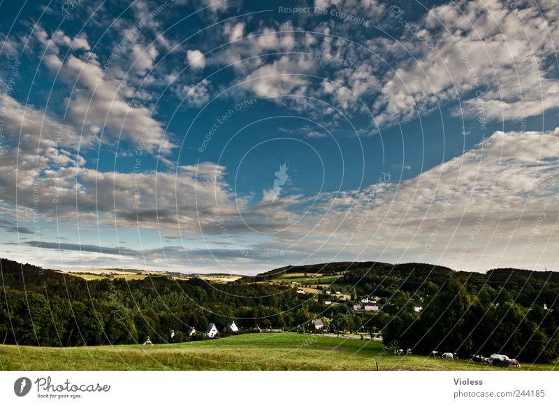Kurgebiet Natur Himmel Ferien & Urlaub & Reisen Wolken Erholung Wiese Berge u. Gebirge Landschaft entdecken Kuh Schönes Wetter Erzgebirge Wolkenformation