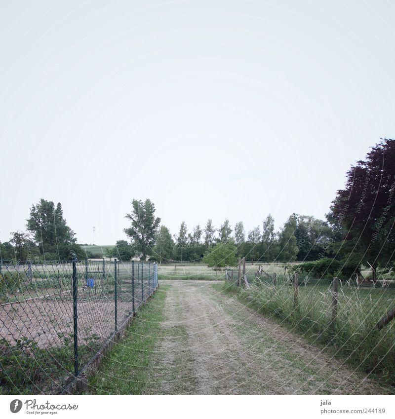 weg Umwelt Natur Landschaft Himmel Pflanze Baum Gras Sträucher Garten Wiese Feld natürlich trist blau grau grün Farbfoto Außenaufnahme Menschenleer