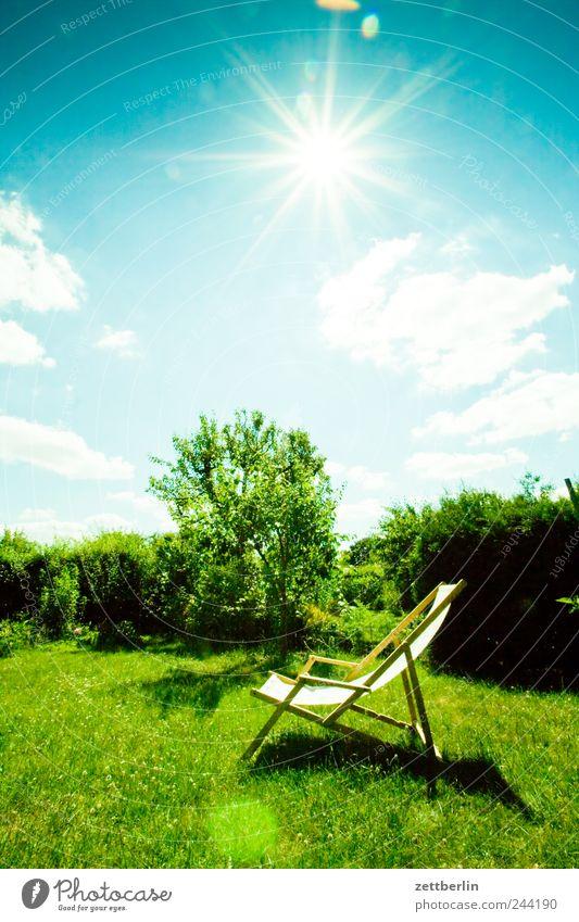 Sommer Natur Landschaft Pflanze Himmel Sonne Klima Wetter Schönes Wetter Baum Garten Wiese Erholung Glück Zufriedenheit Optimismus Juni Kleingartenkolonie Hecke