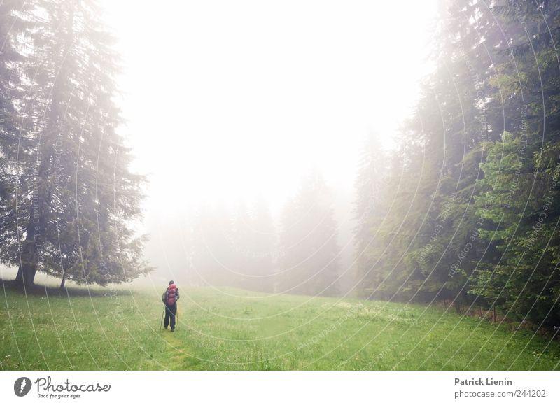 The Passenger Natur Baum grün Pflanze Ferien & Urlaub & Reisen Einsamkeit Ferne Wald Berge u. Gebirge Freiheit Regen Landschaft Luft wandern Nebel Wind