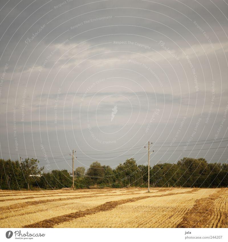 güldener sommer Natur Himmel Baum grün blau Pflanze Gras Landschaft Feld Umwelt gold Sträucher natürlich Strommast Grünpflanze Nutzpflanze