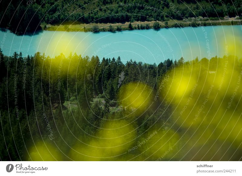 Gelb ist auch Inn Natur Baum Blume Sommer gelb Wald Blüte Berge u. Gebirge Landschaft Fluss Alpen Tanne türkis Tal Inn