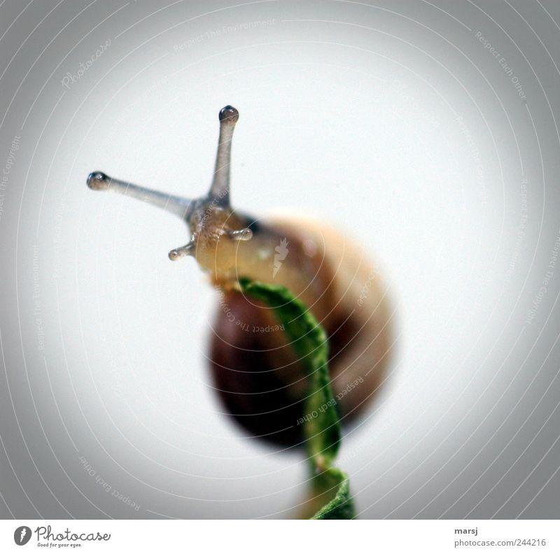 Und jezt wohin?!? Einsamkeit Tier grau braun Tierjunges Wildtier authentisch einfach beobachten Tiergesicht Neugier entdecken Ekel Schnecke krabbeln Vorsicht
