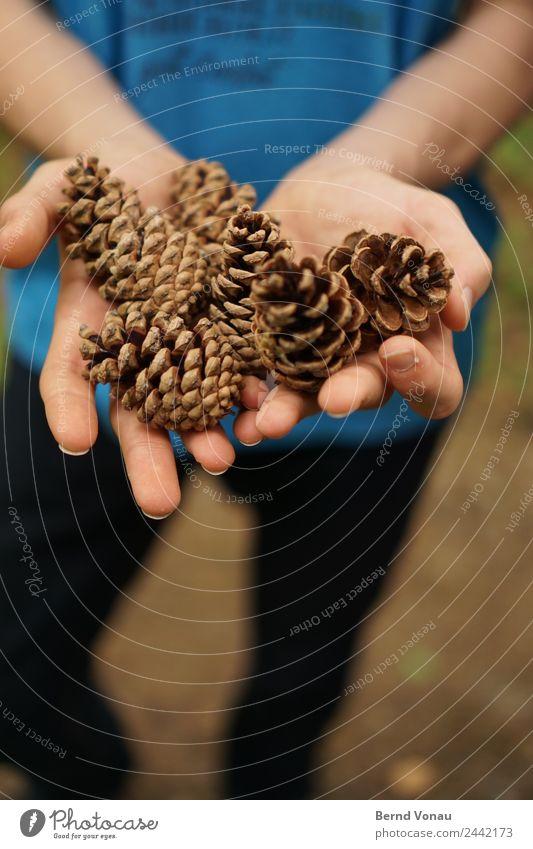 ernte Hand Finger 1 Mensch Natur Pflanze authentisch Zapfen Kiefernzapfen haltend zeigen Ernte Sammlung entdecken Dekoration & Verzierung Holz braun blau Haut