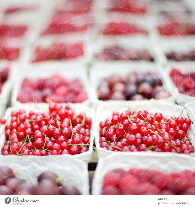 rote Früchte rot Ernährung Lebensmittel Frucht frisch süß lecker Appetit & Hunger Bioprodukte Schalen & Schüsseln Beeren saftig sauer Himbeeren Vegetarische Ernährung Johannisbeeren