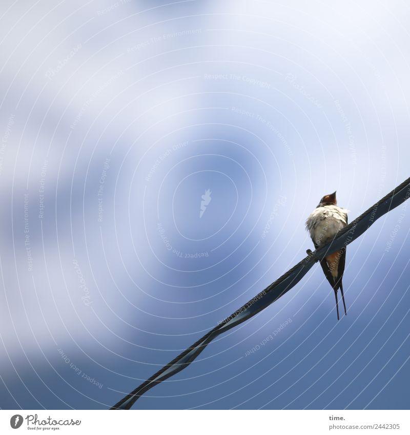 UT Dresden | Schiffsjunge schön Tier natürlich Zeit klein Vogel Wildtier Energiewirtschaft Technik & Technologie sitzen beobachten Neugier entdecken Stahlkabel