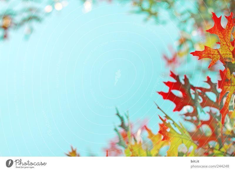 Herbst bleib, wo du bist ;-) Natur Ferien & Urlaub & Reisen blau schön grün Pflanze Baum rot ruhig gelb Feste & Feiern Garten gold Lifestyle