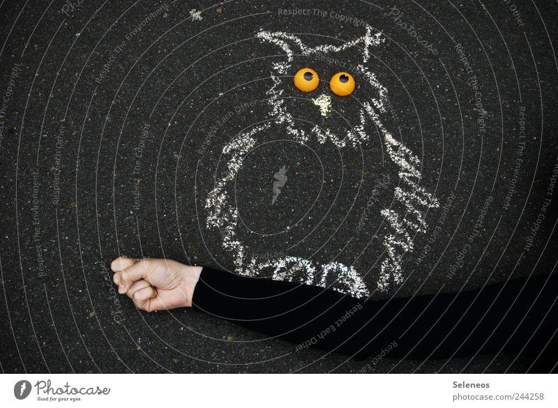 Wer will auch mal halten? Freizeit & Hobby Spielen Mensch Arme Hand 1 Strassenmalerei Straße Pullover Tier Eulenvögel Uhu Stein zeichnen Auge festhalten sanft