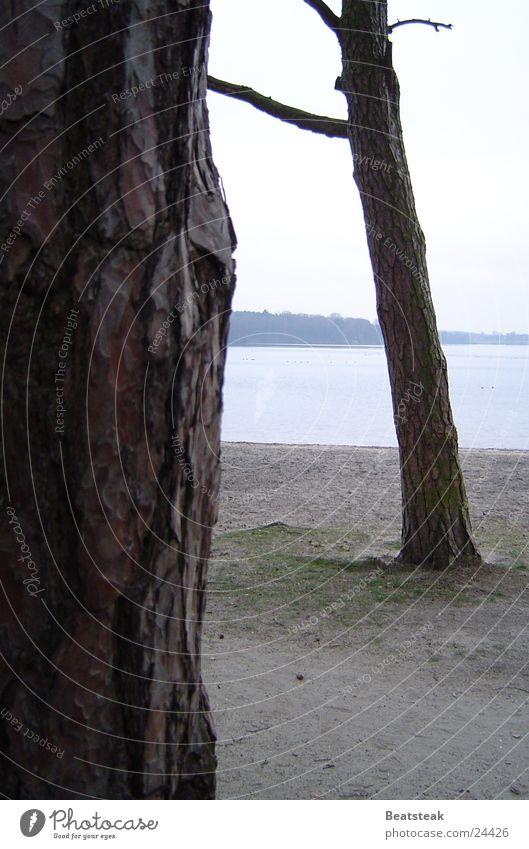 winter tristesse Baum See Strand Wald Baumrinde Wolken Kiefer Sand Küste Natur Graffiti