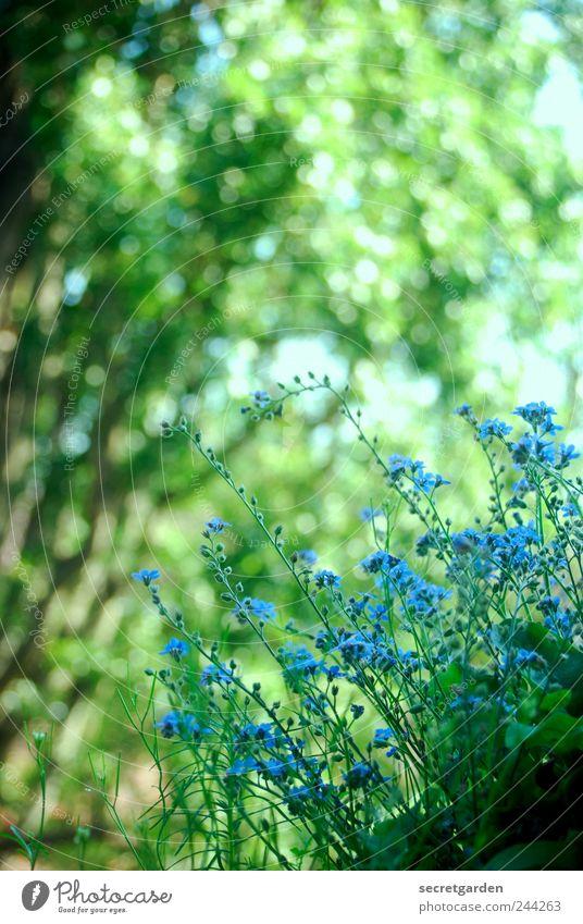 letzten zuckungen des sommers Natur Baum grün blau Pflanze Sommer Blüte Frühling Garten Park Wohnung Umwelt Wachstum Sträucher Häusliches Leben Blühend