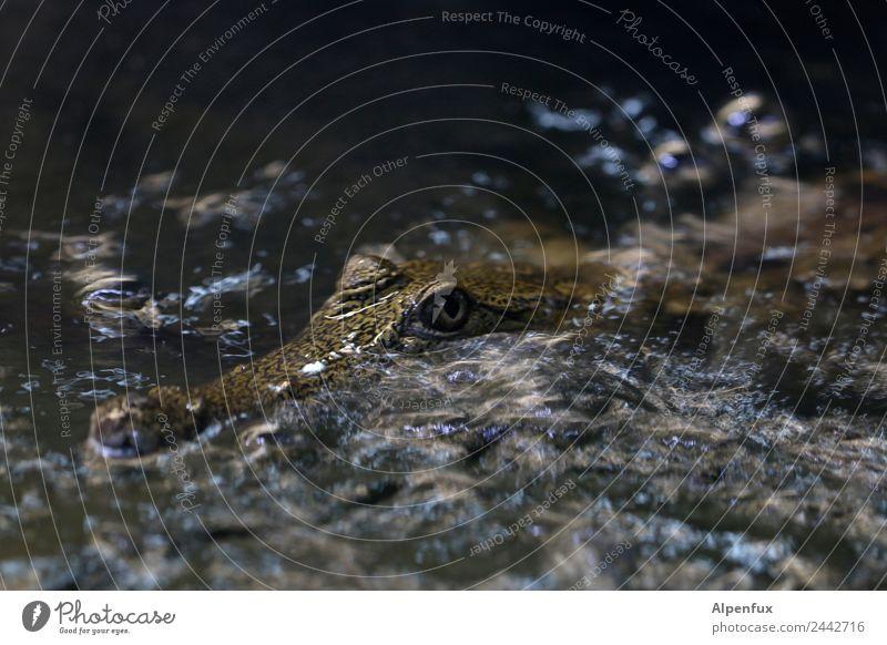 Krimi | Der Täter Umwelt Tier Fluss Wildtier Krokodil 1 Schwimmen & Baden warten achtsam Wachsamkeit Gelassenheit geduldig Appetit & Hunger Angst gefährlich
