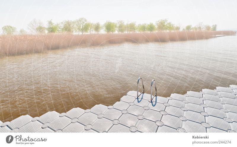 Saisonbeginn Tourismus Schwimmbad Wasser Schilfrohr Seeufer Neusiedler See Rust Burgenland Ponton Kunststoff Schwimmen & Baden genießen ästhetisch