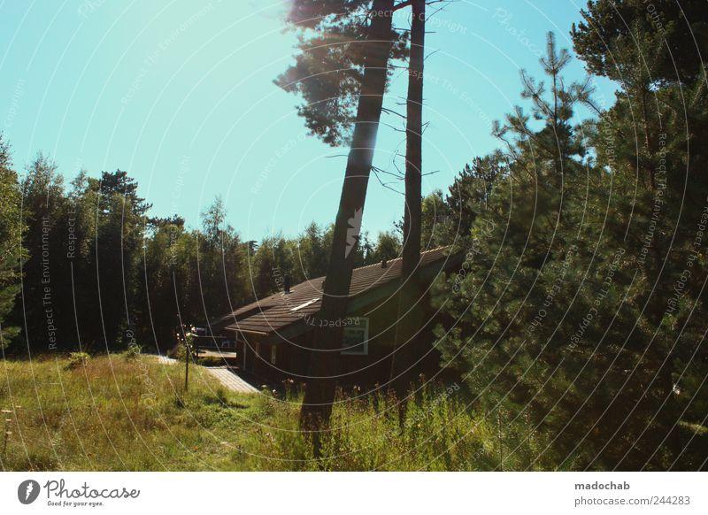 Tengslemark Lyng Natur Sommer Ferien & Urlaub & Reisen ruhig Haus Wald Farbe Erholung Landschaft Glück Stimmung Zufriedenheit Tourismus Lifestyle