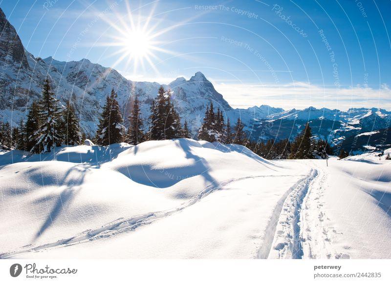 Panoramic scenery above Grindelwald Natur blau Landschaft weiß Winter Wald Berge u. Gebirge Schnee Ausflug wandern Alpen Schweiz Eiger