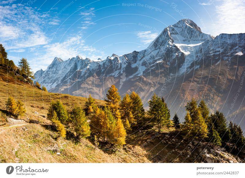 Bietschorn mountain peak in autumn Natur braun wandern gold Alpen Schweiz alpin Kanton Wallis Lötschental