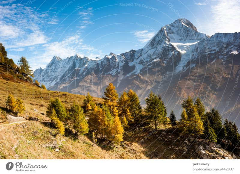 Bietschorn mountain peak in autumn wandern Natur Alpen braun gold alpin alps bietschorn fall grass hiking hiking trail landscape laucheralp Lötschental meadow