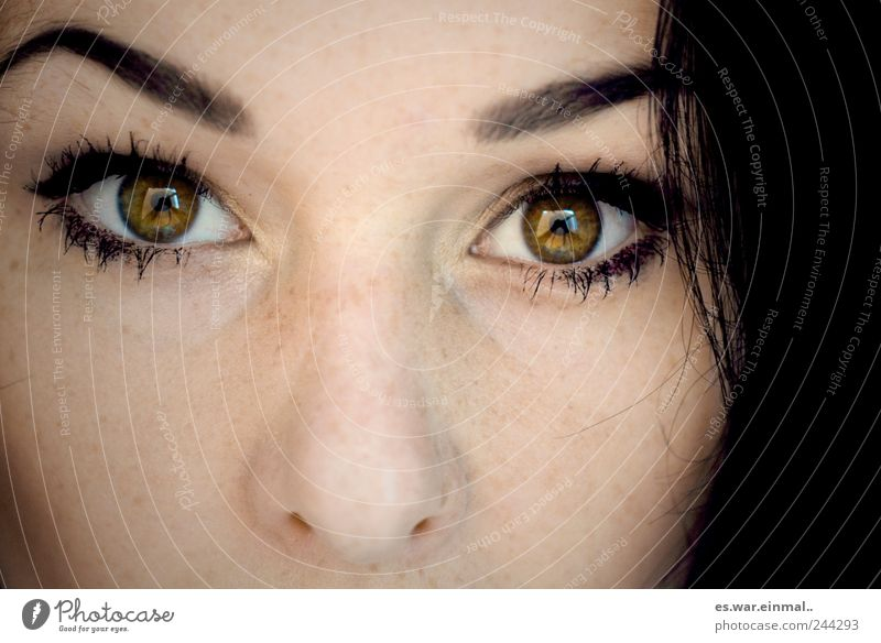 zwei grün Auge feminin Gefühle Haare & Frisuren beobachten Spiegel Wachsamkeit Augenbraue Ehrlichkeit Regenbogenhaut
