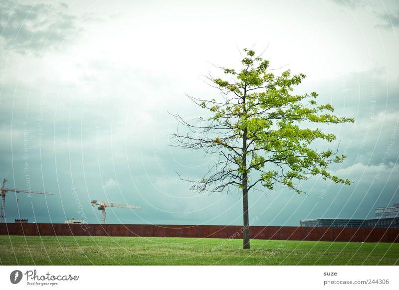 Gespaltene Persönlichkeit Himmel grün Baum Wolken Umwelt Wand Wiese Berlin Mauer Wetter Wachstum Platz Klima Baustelle Wandel & Veränderung Teilung