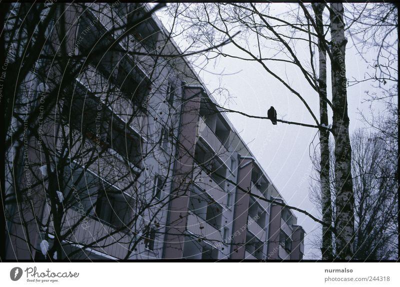 ganz allein Baum Einsamkeit Haus dunkel Umwelt Stimmung Kunst Vogel Wohnung sitzen Fassade Nebel Hochhaus Klima Lifestyle trist