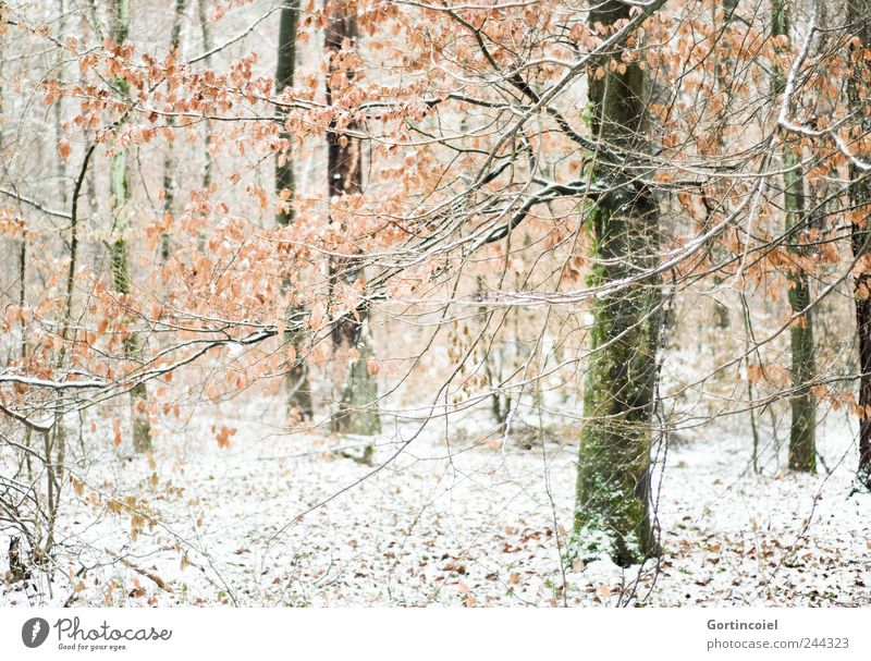 Winterwald Umwelt Natur Landschaft Eis Frost Schnee Baum Wald kalt Winterstimmung Wintertag Schneedecke Ast Blatt Romantik Waldboden Baumstamm Farbfoto