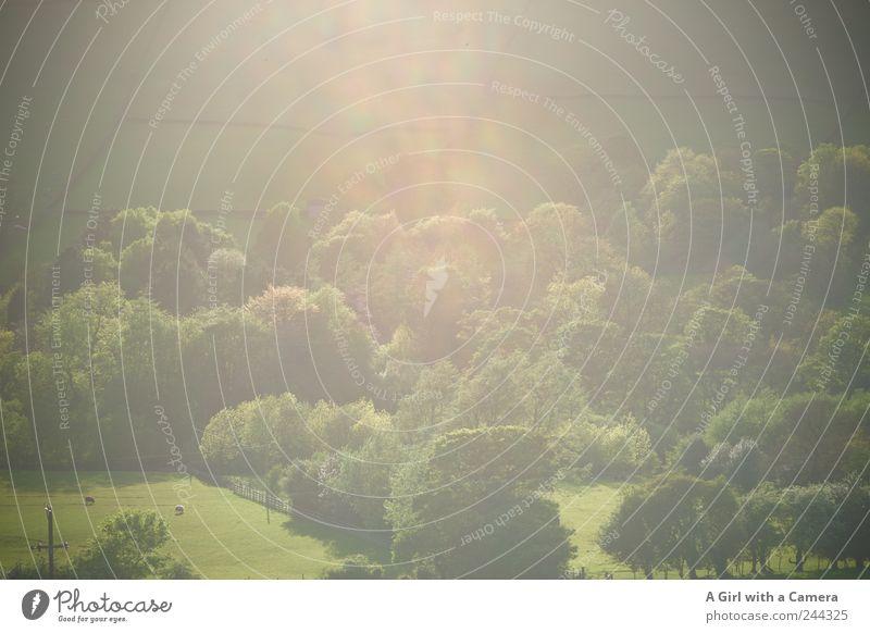 dreamy Natur grün schön Baum Sommer Wald Umwelt Landschaft Gras Mauer träumen Beleuchtung Feld Nebel frei leuchten