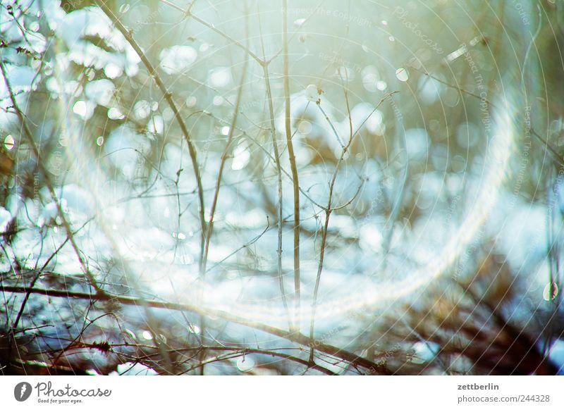 Winter Natur Pflanze Ferien & Urlaub & Reisen Ferne kalt Wiese Schnee Freiheit Umwelt Landschaft Garten Gras Park Wetter Freizeit & Hobby