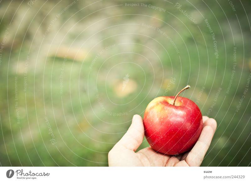 Aha-Effekt Lebensmittel Frucht Apfel Ernährung Frühstück Picknick Bioprodukte Vegetarische Ernährung Diät Hand Herbst Wiese festhalten grün rot Erkenntnis
