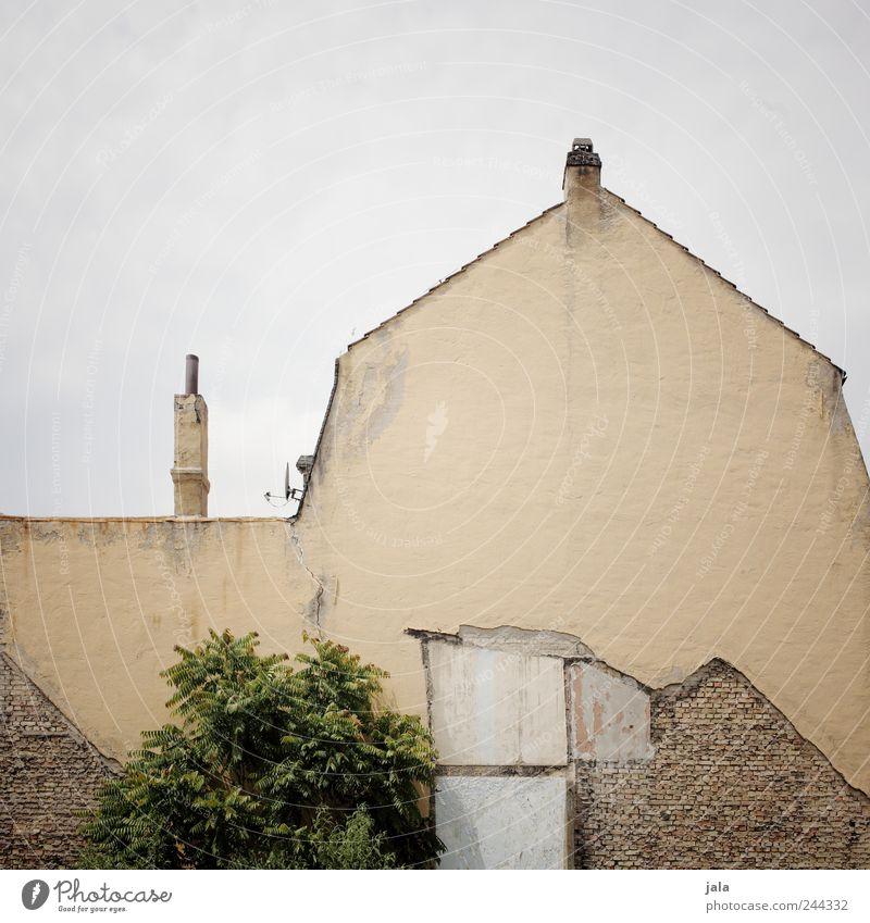 giebel Himmel Pflanze Baum Haus Bauwerk Gebäude Mauer Wand Fassade Dach Schornstein trist Abrissgebäude Farbfoto Außenaufnahme Menschenleer Textfreiraum oben