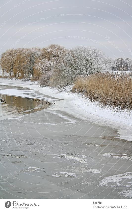 Ein Wintertag Natur Landschaft Baum ruhig Umwelt kalt Schnee grau Eis Wetter Tiergruppe Frost gefroren Teich Ente