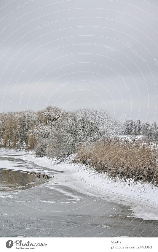 zeitlos | Himmelgrau Natur Landschaft Wasser Wolken Winter Klima Wetter Eis Frost Schnee Baum Teich Teichufer Ente Tiergruppe kalt schön Winterstimmung