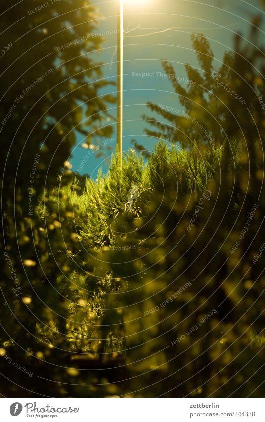 Nachtschicht Natur Baum Pflanze Sommer Blume Ferne Landschaft Umwelt Gras Garten Wetter Freizeit & Hobby Ausflug Klima Sträucher Sehnsucht