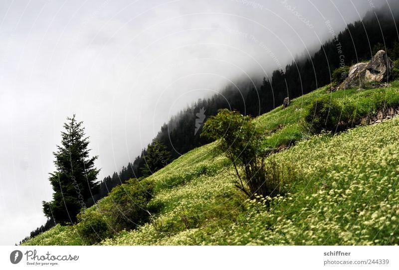 Horizont, schief Natur Landschaft Wolken Sommer schlechtes Wetter Nebel Regen Baum Blume Gras Sträucher Wiese Wald Hügel Alpen Berge u. Gebirge grün steil