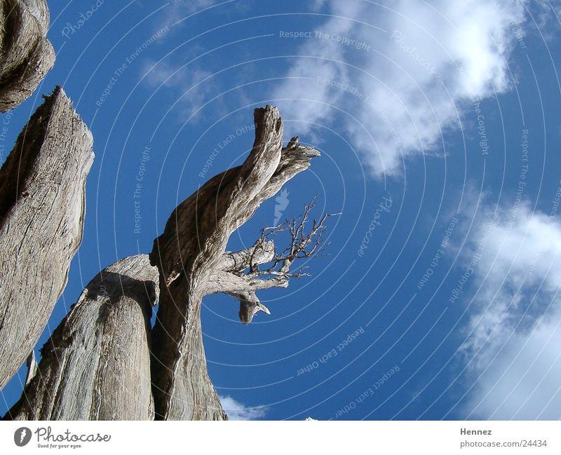Blick nach oben Wolken Baum Tod Himmel blau