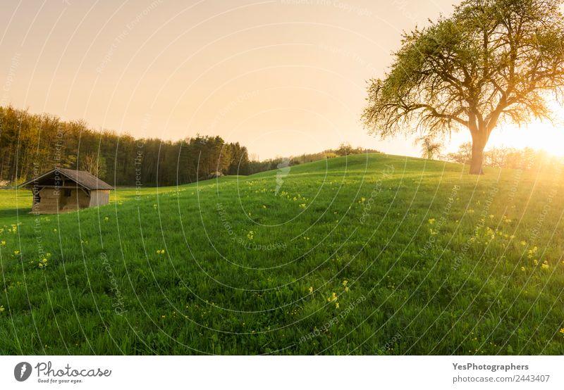 Sonnenuntergang über einer Scheune und Frühlingswiese schön Tourismus Sommer Natur Landschaft Gras Wiese Wald Hügel Optimismus Einsamkeit Idylle Deutschland