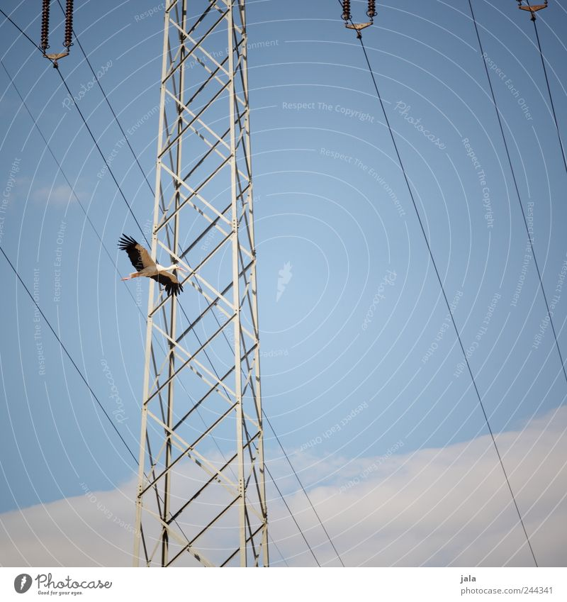 überflieger Natur Himmel Wolken Tier Vogel fliegen Wildtier Strommast Storch