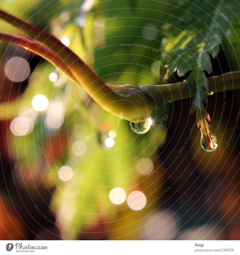 Glitzertröpfchen für ginger.... Natur Wasser grün schön Pflanze Blatt gelb Garten braun klein glänzend Umwelt nass Wassertropfen ästhetisch Wachstum