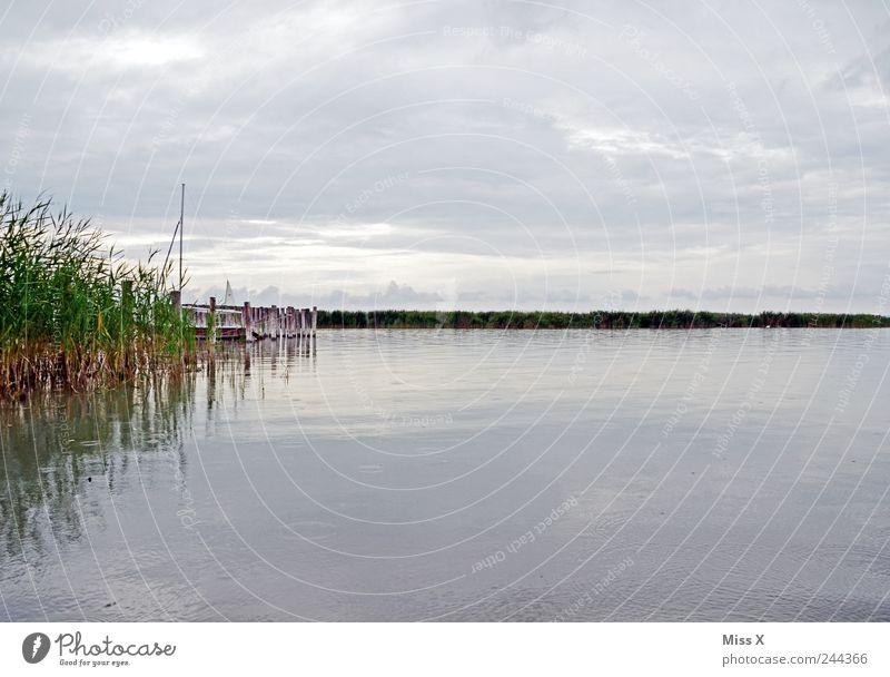 nix los am See Umwelt Natur Landschaft Wasser Wolken schlechtes Wetter Gras Küste Seeufer Schifffahrt kalt trist grau Bundesland Burgenland Schilfrohr Steg