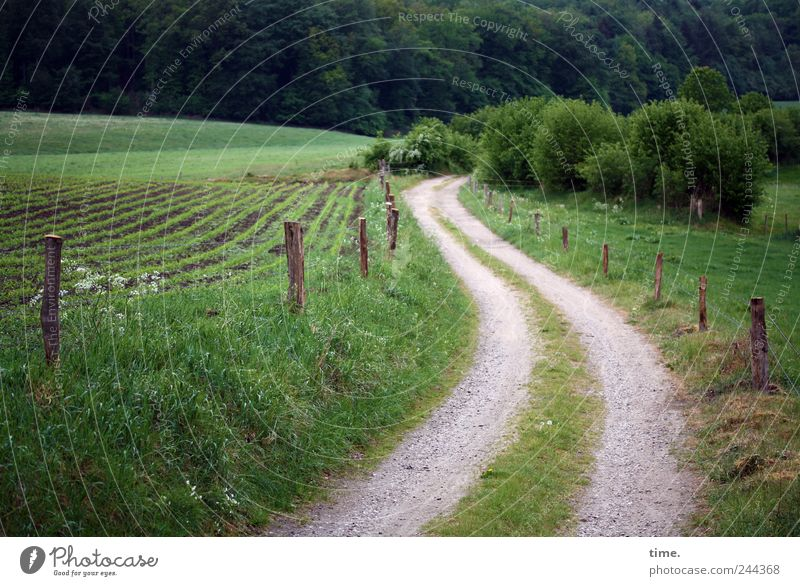 Lebenslinien #29 Wald Umwelt Gefühle Bewegung Wege & Pfade Freundschaft Stimmung Zufriedenheit Feld ästhetisch Sträucher Spuren Weide Ewigkeit Landwirtschaft