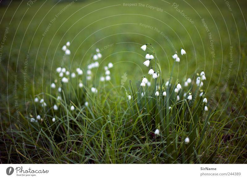 167 [frisch] Natur Pflanze Blume Landschaft Blatt ruhig Umwelt Wiese Gras Blüte Stimmung Park wild Wachstum wandern ästhetisch