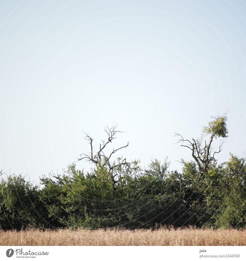 feldrand Umwelt Natur Landschaft Pflanze Himmel Gras Sträucher Grünpflanze Feld natürlich blau grau beige Farbfoto Außenaufnahme Menschenleer Textfreiraum oben