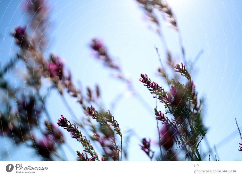 Sommerviolette Kräuter Lifestyle Wellness Leben harmonisch Wohlgefühl Zufriedenheit Sinnesorgane Erholung ruhig Meditation Duft Ferien & Urlaub & Reisen Umwelt