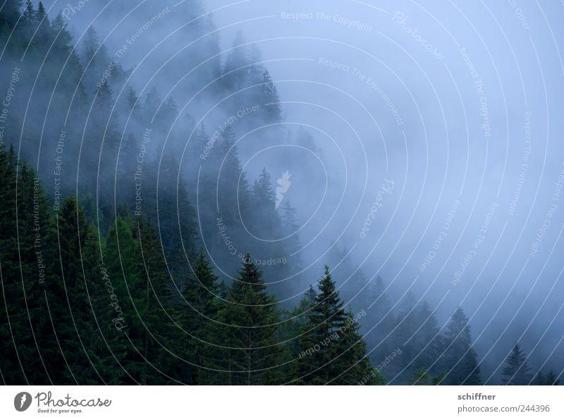 Schönes Wetter... Landschaft Wolken Klima schlechtes Wetter Nebel Regen Wald Alpen Berge u. Gebirge bedrohlich Dämmerung Berghang Nadelwald Nebelwand